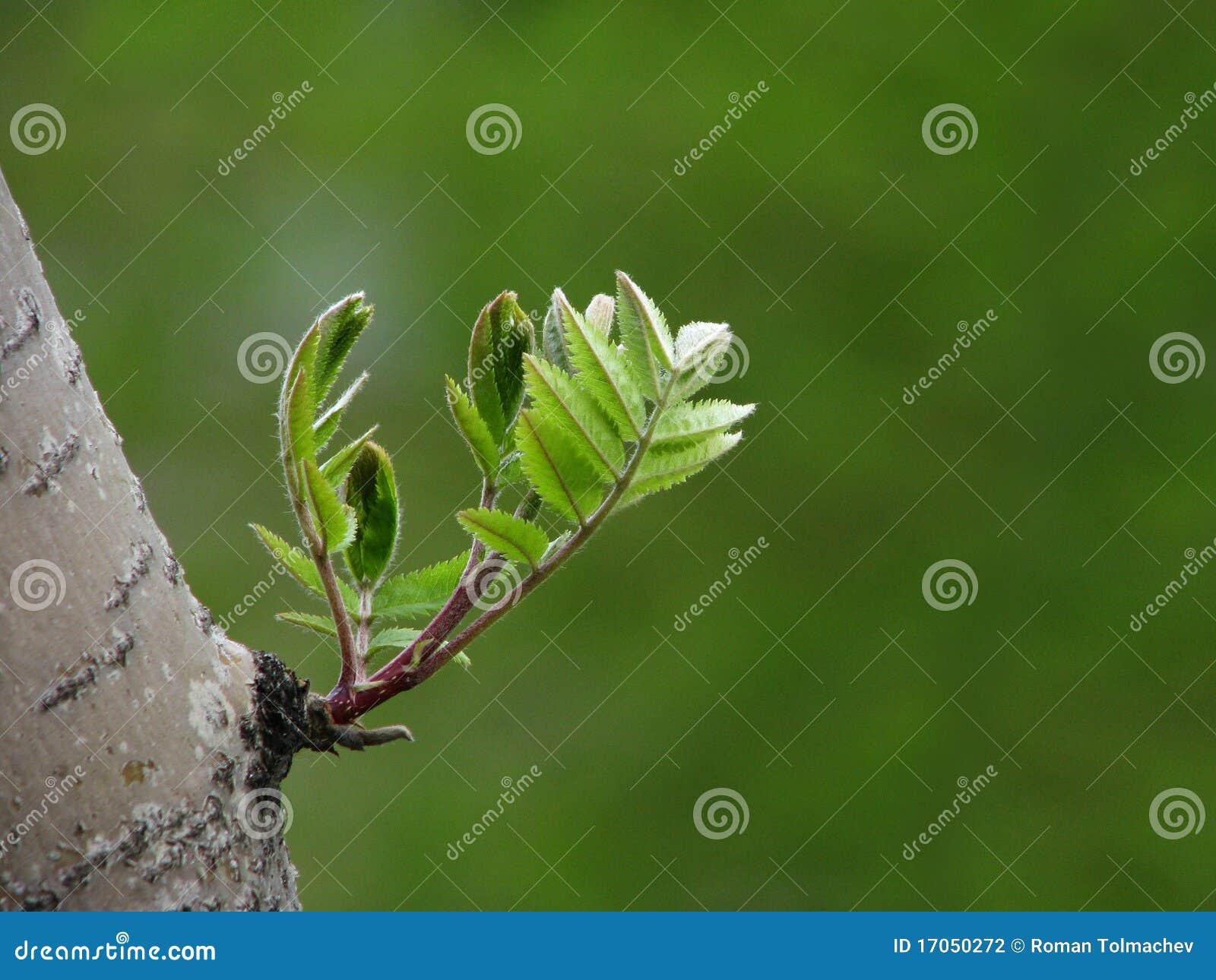 νεολαίες δέντρων φύλλων