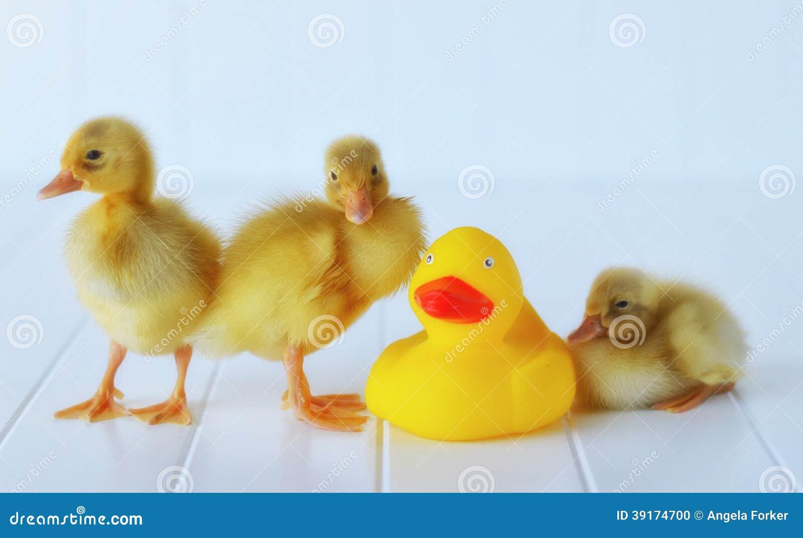 Νεοσσοί με ένα λαστιχένιο Duckie