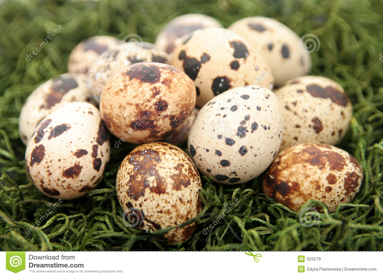 νησοπέρδικες αυγών