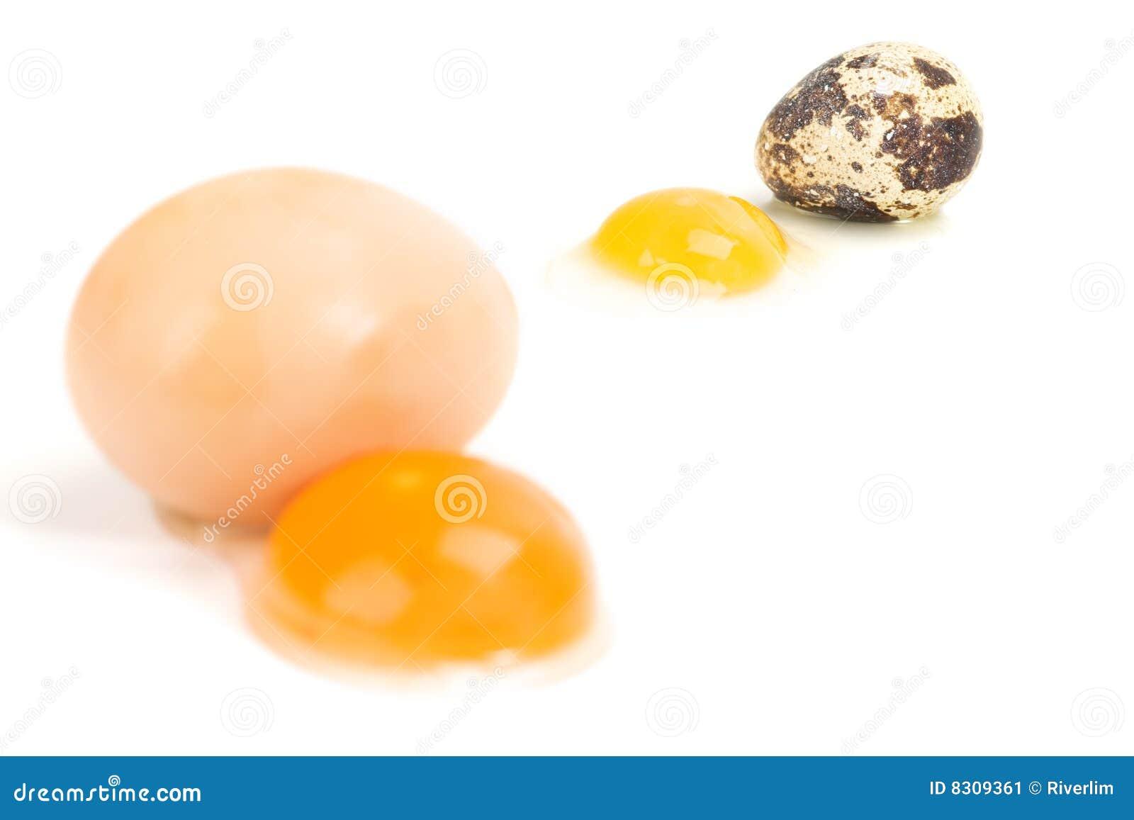 νησοπέρδικες κοτών αυγών
