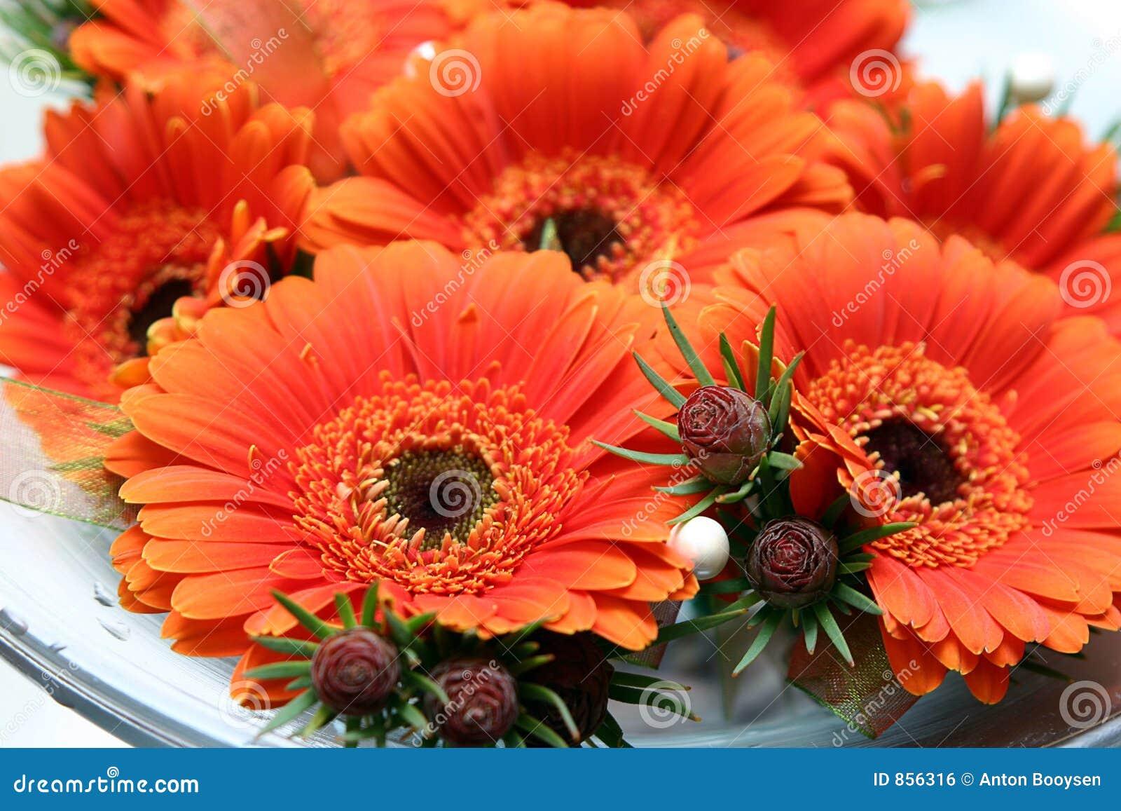 νυφικό πορτοκάλι μαργαριτών