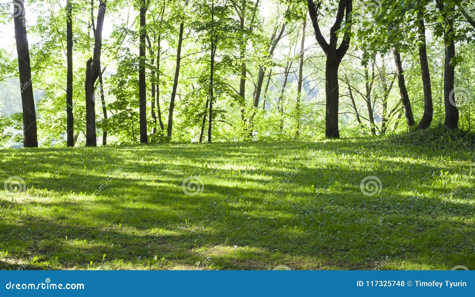Ξέφωτο στο δάσος στο πρωί άνοιξη Υπόβαθρο, φύση