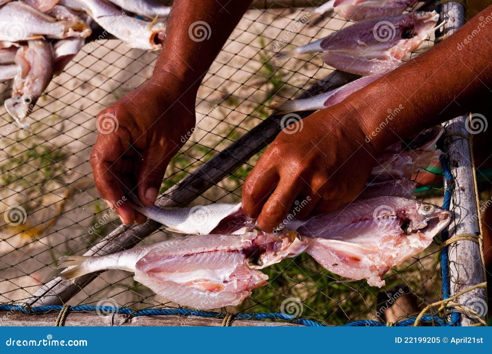 ξεραίνοντας ήλιος ψαριών