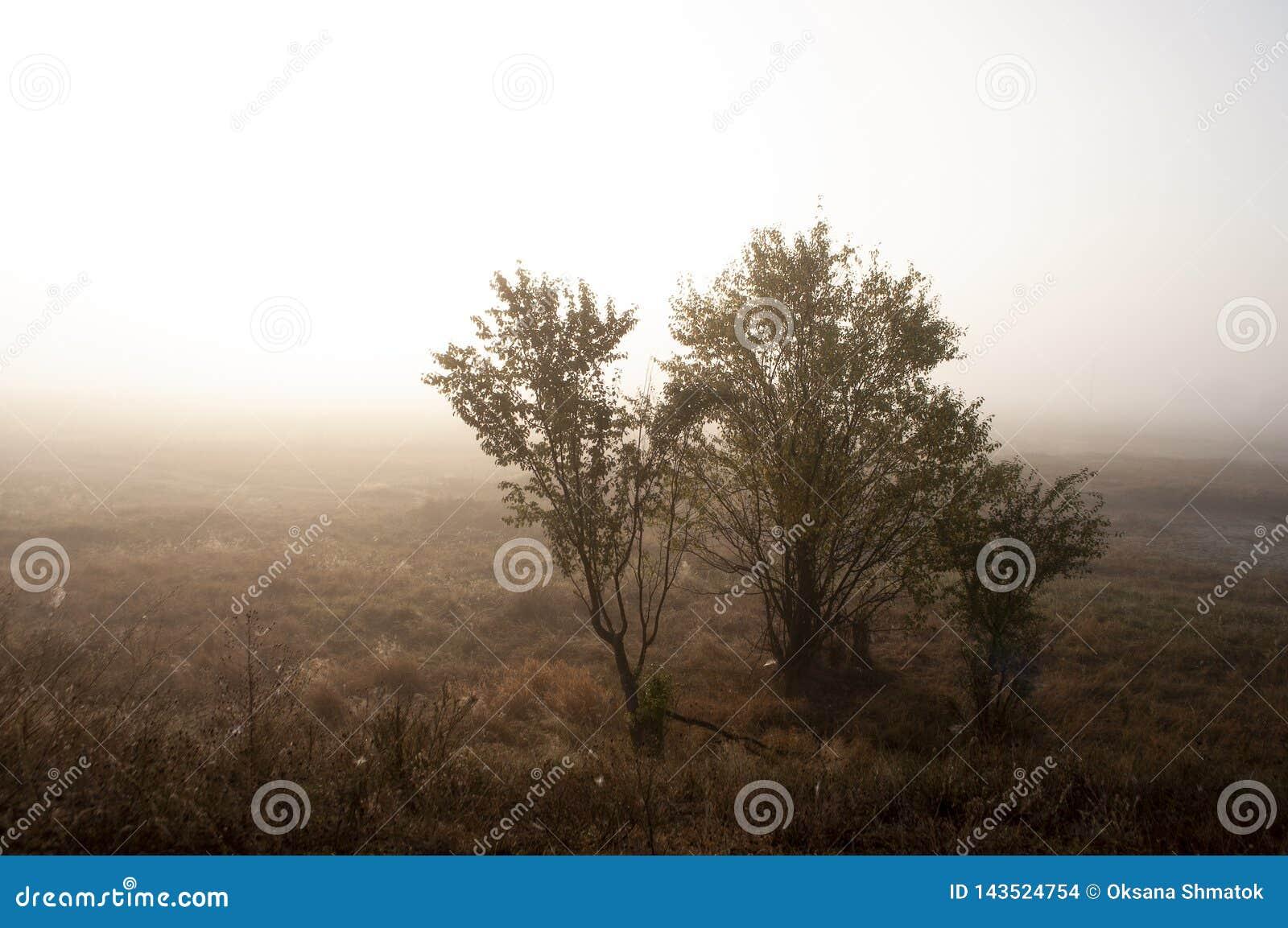 Ξημερώματα στον τομέα με την ομίχλη φθινοπώρου και τις πτώσεις του νερού στον αέρα Αποχρώσεις καφετιού Τίποτα δεν θα μπορούσε μακ
