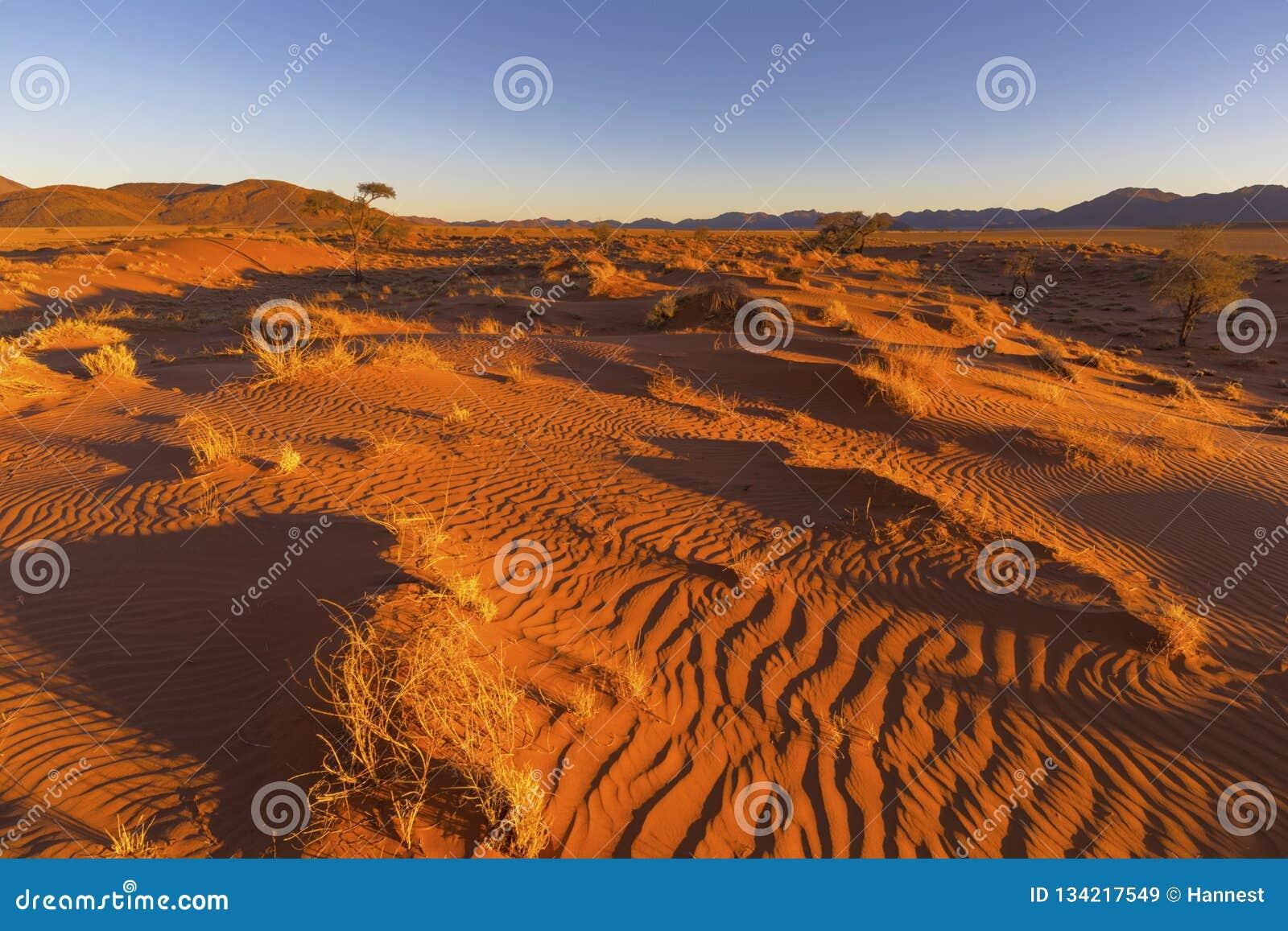 Ξηρά κίτρινη χλόη και σκουπισμένα αέρας σχέδια στην άμμο