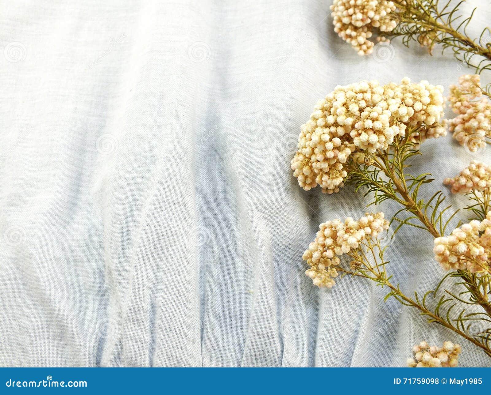 Ξηρά λουλούδια στο υπόβαθρο υφάσματος