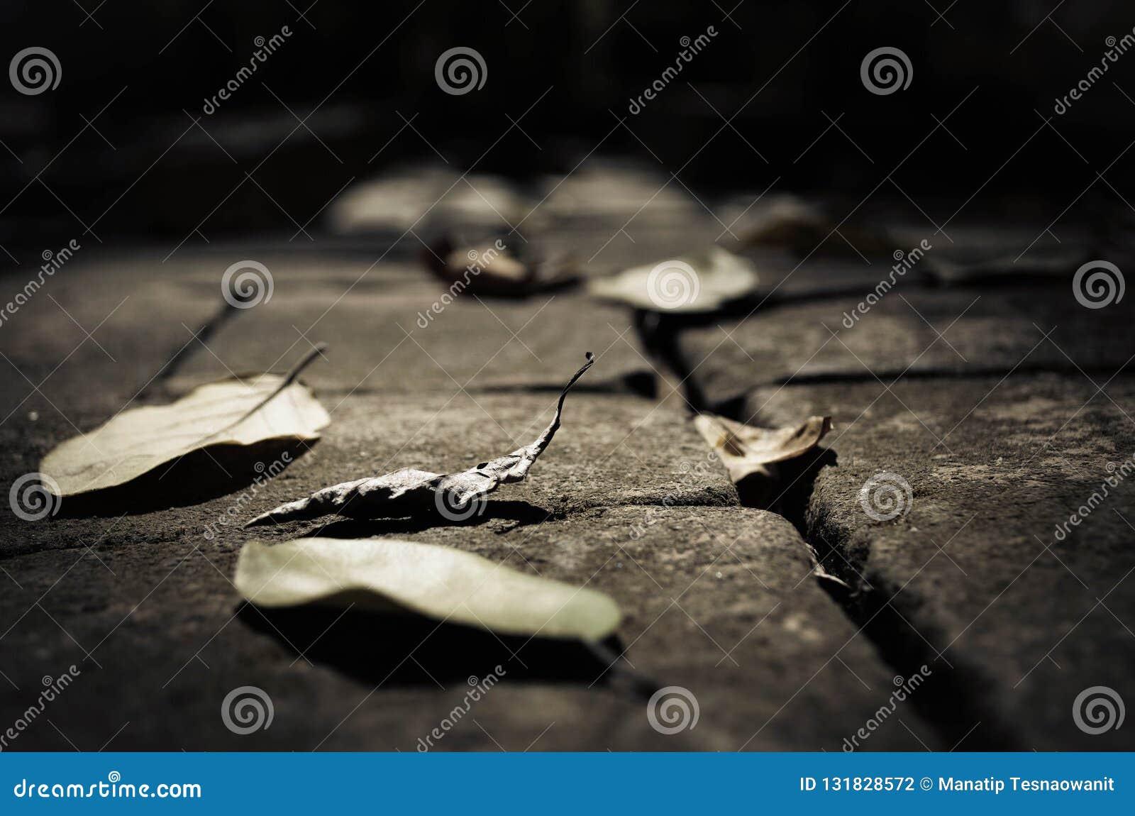 Ξηρά φύλλα στο πάτωμα