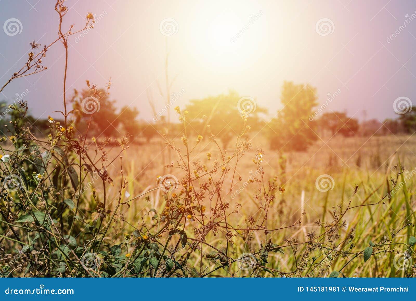 Ξηρά χλόη φύλλων και φωτεινός ήλιος
