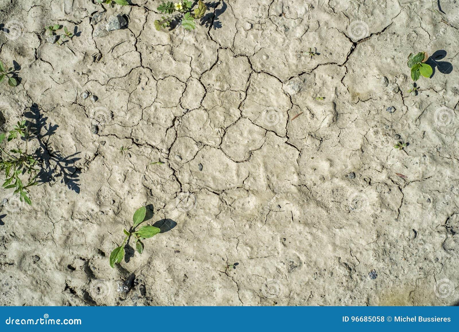 ξηρασία