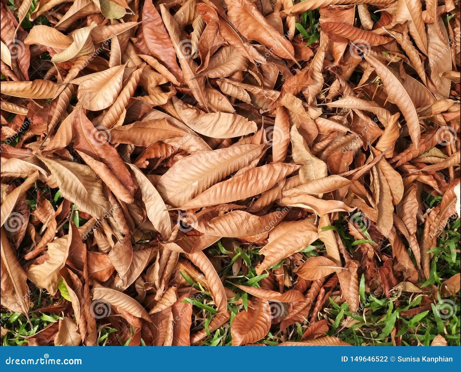 Ξηρός βγάζει φύλλα στο πάτωμα