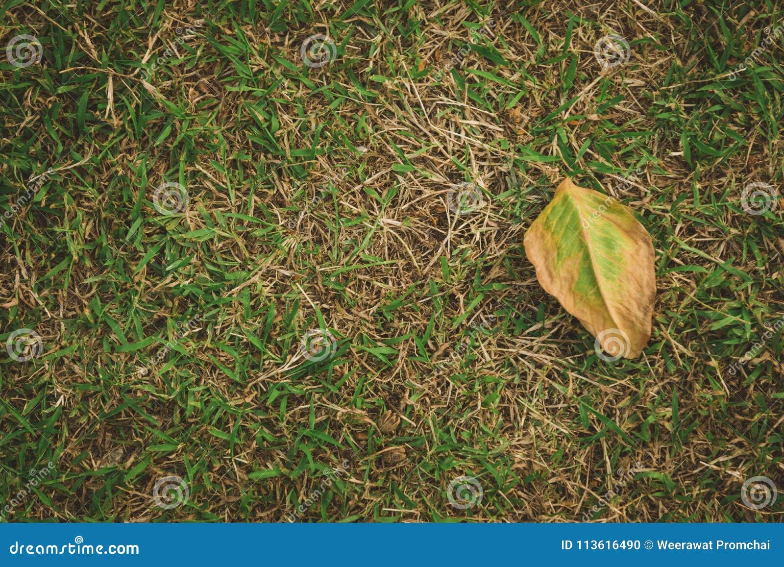 Ξηρό φύλλο στο πάτωμα χλόης κατά τη τοπ άποψη γωνίας