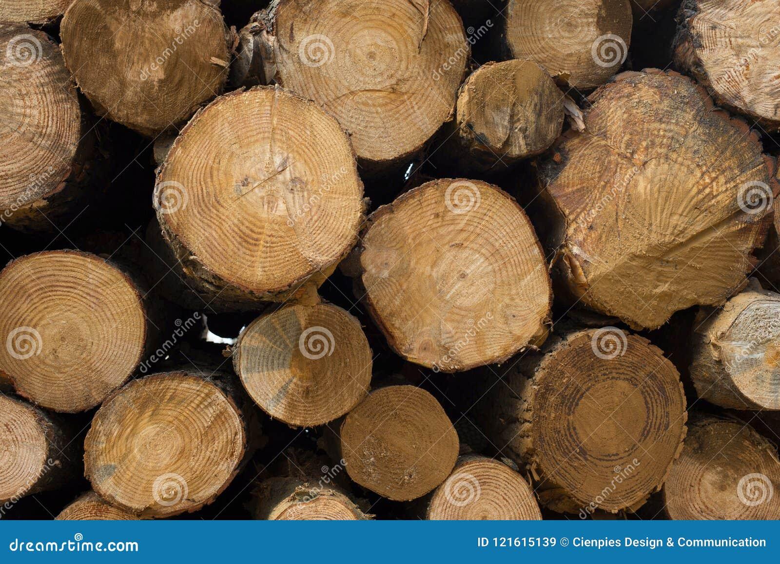 Ξύλινη σύσταση κούτσουρων των ξύλινων κορμών δέντρων