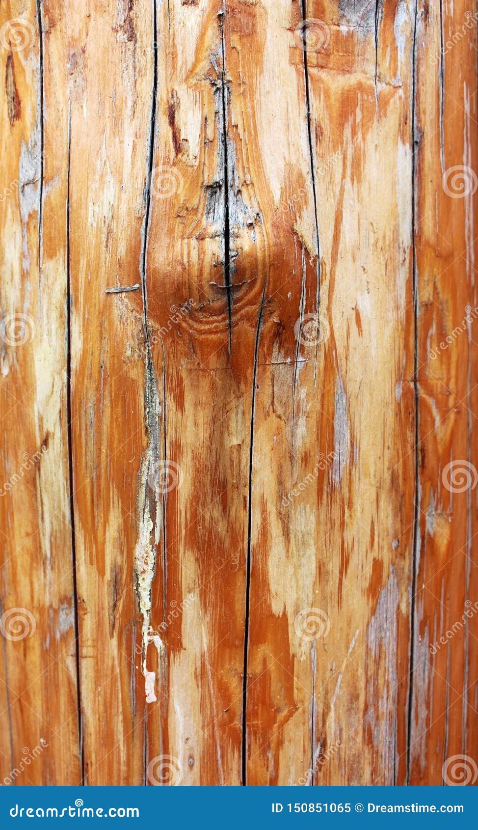 Ξύλινη σύσταση του παλαιού shabby σκουριασμένου κούτσουρου