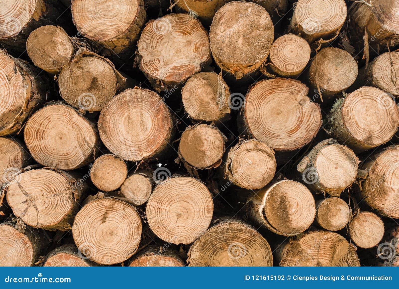 Ξύλινο υπόβαθρο σωρών κούτσουρων για τη βιομηχανία ξυλείας