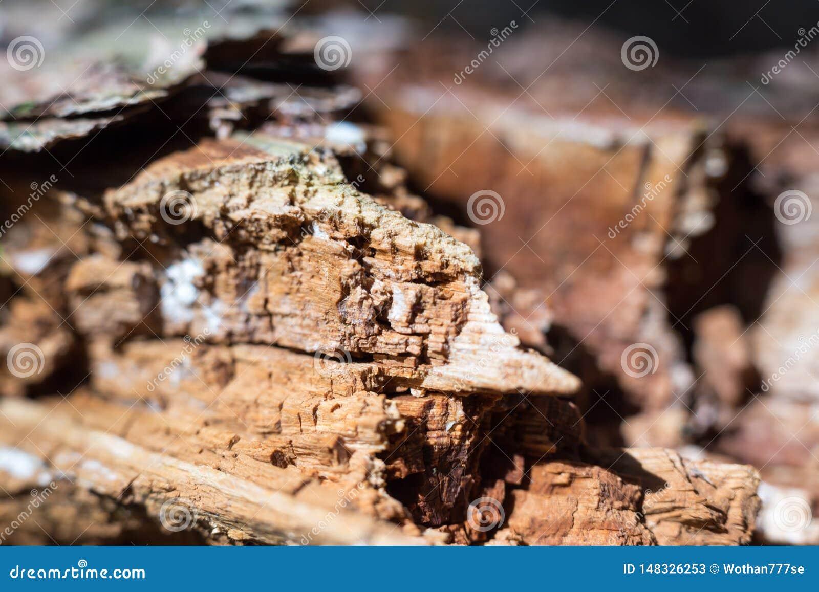 ξύλο στο δάσος αυτοκτονίας