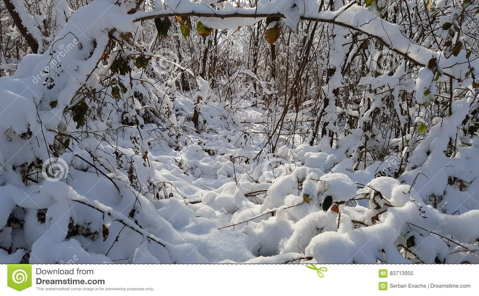 Ξύλα το χειμώνα