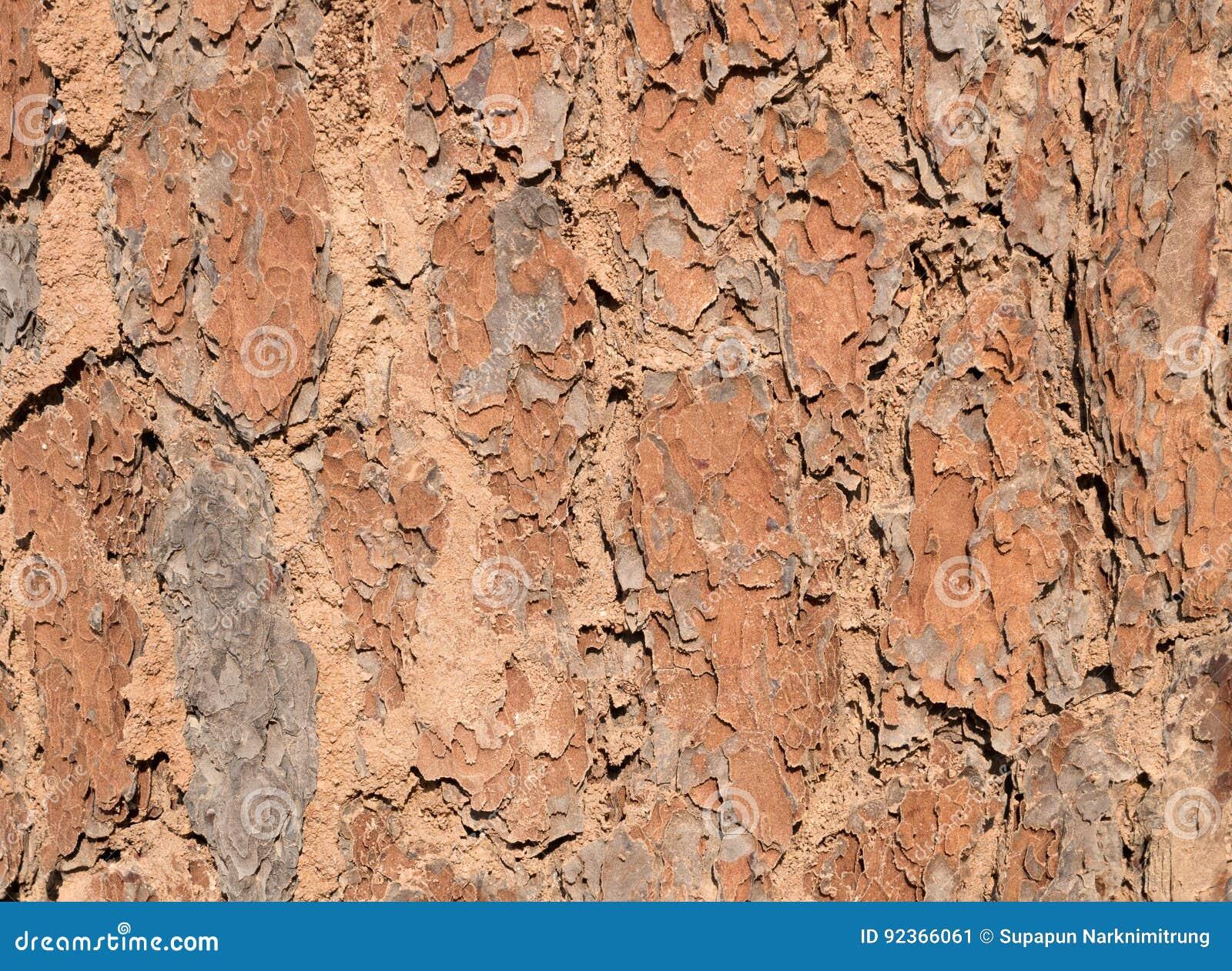 Ξύλινες λεπτομέρειες δέντρων φλοιών κλείστε επάνω το παλαιό υπόβαθρο σύστασης ρυτίδων ξύλινο