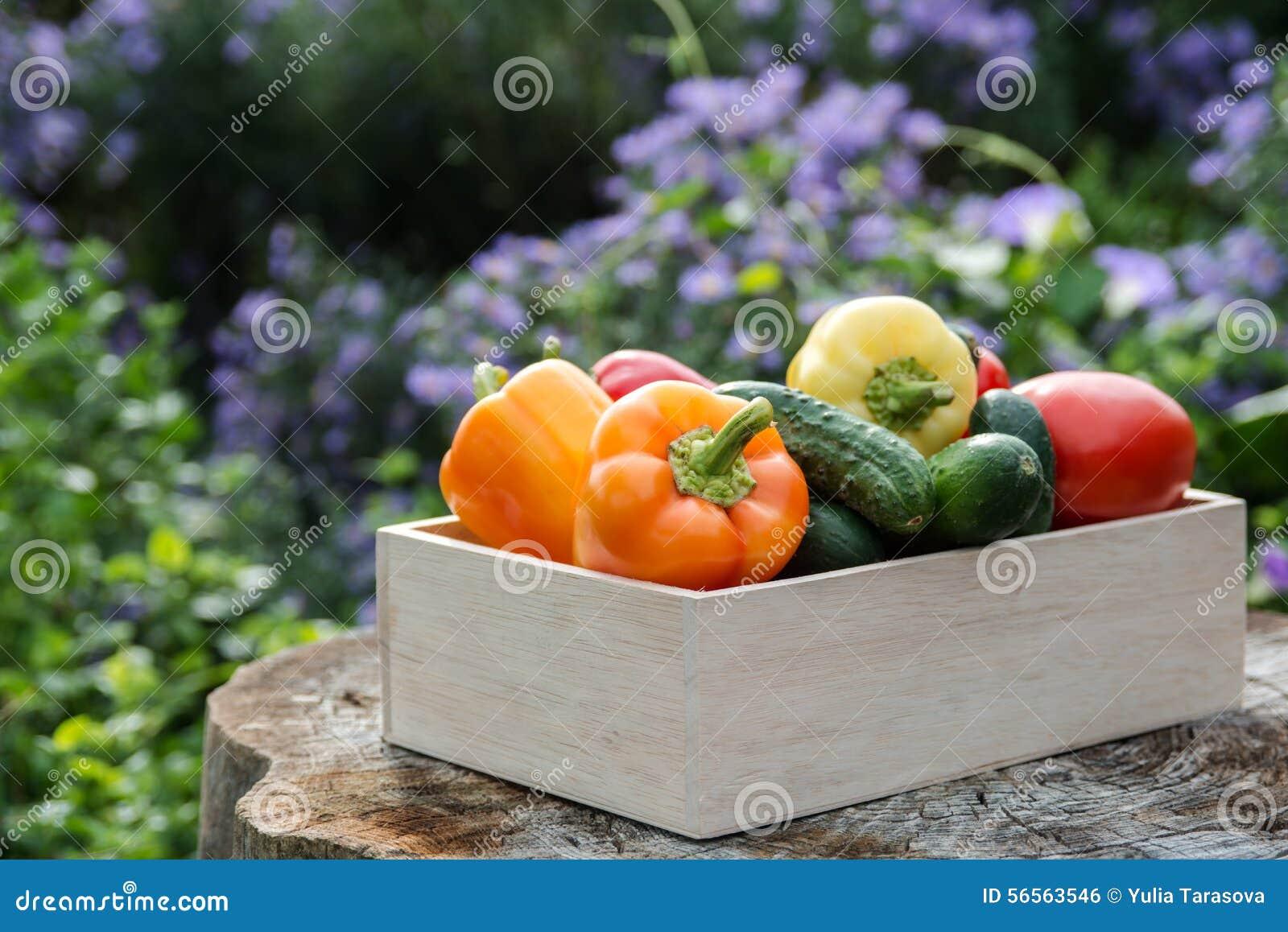 Download Ξύλινο κιβώτιο με τα φρέσκα λαχανικά (ντομάτα, αγγούρι, πιπέρι κουδουνιών) Στοκ Εικόνες - εικόνα από αγρότης, επαρχία: 56563546