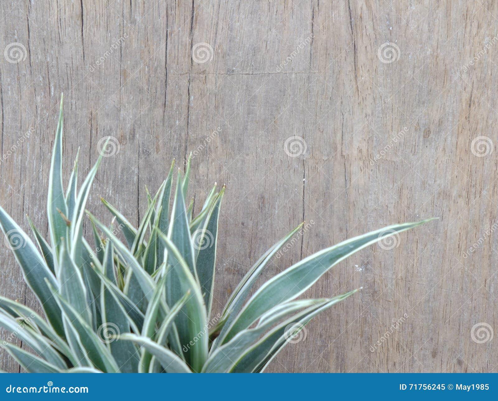 Ξύλινο υπόβαθρο με το πράσινο φυτό σπιτιών φύλλων