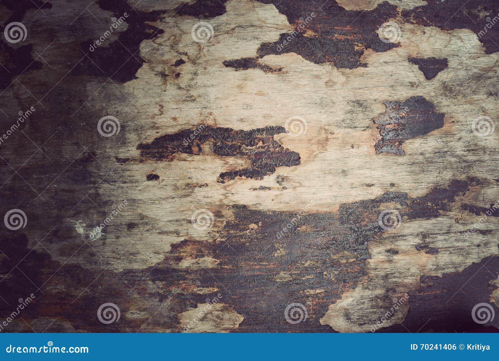 Ξύλινο υλικό υπόβαθρο, εκλεκτής ποιότητας ταπετσαρία