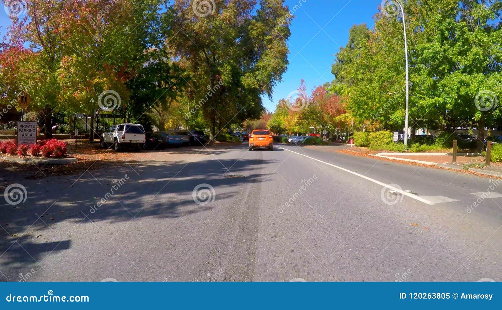 Οδηγώντας κατά μήκος των όμορφων δενδρωδών οδών φθινοπώρου Stirling, Νότια Αυστραλία