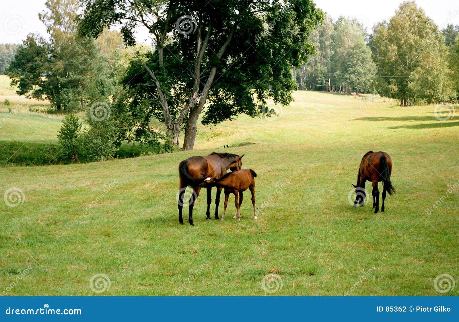 οικογενειακά άλογα