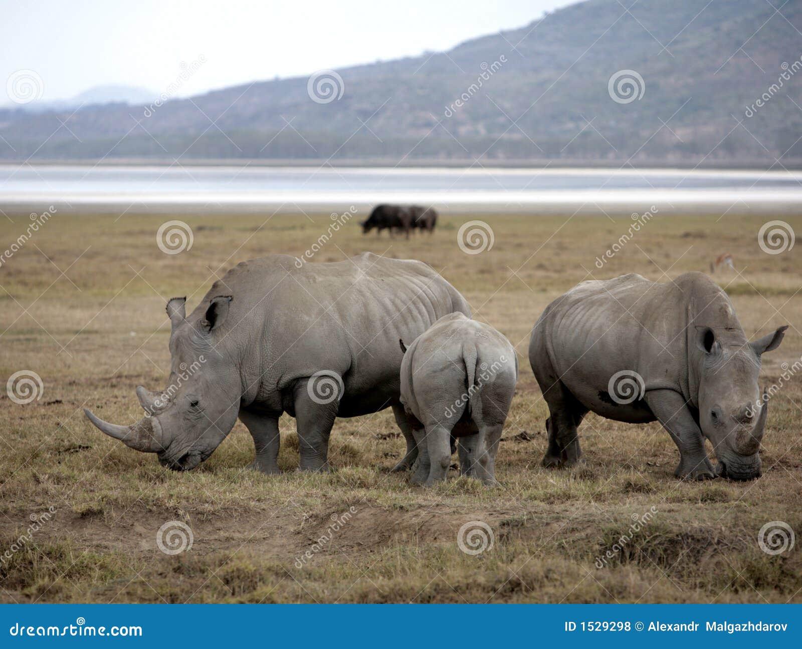 οικογενειακοί ρινόκερ&o
