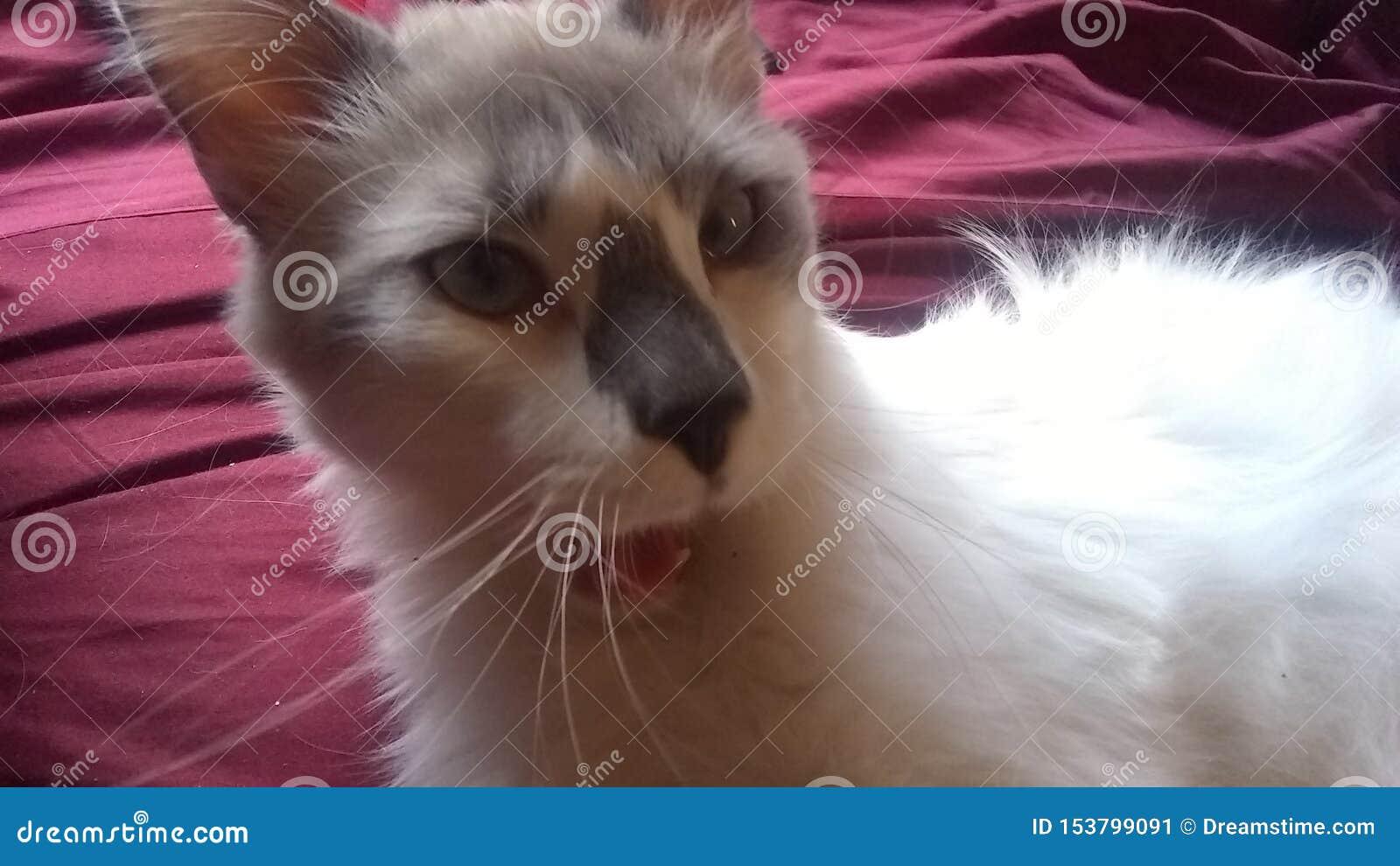 Οι γάτες είναι οικογένεια επίσης--& x22 huh, το U πήρε me& x22