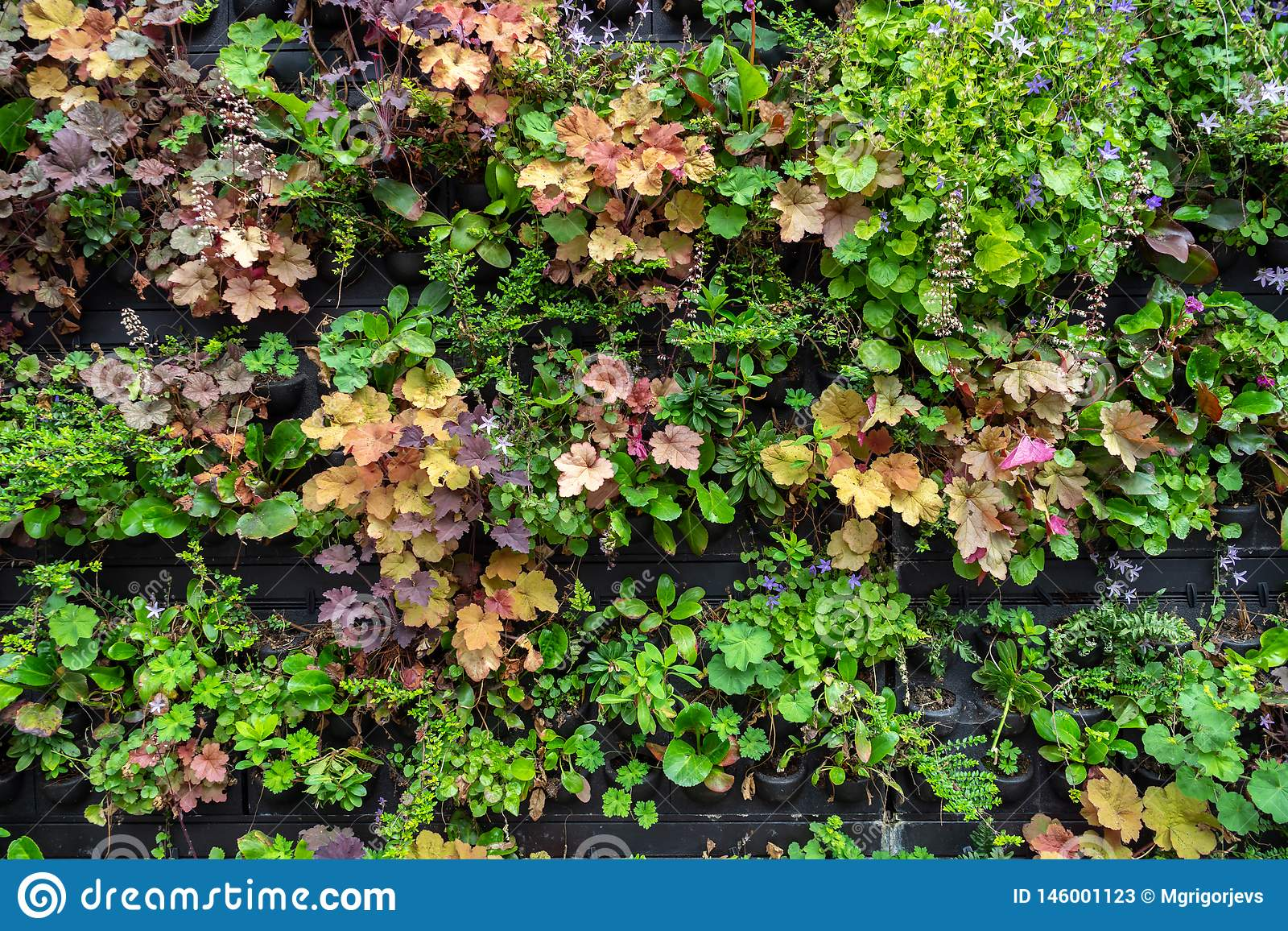 Οι εγκαταστάσεις και τα λουλούδια στα δοχεία για την πώληση στον κήπο κεντροθετούν ή φυτεύουν το βρεφικό σταθμό
