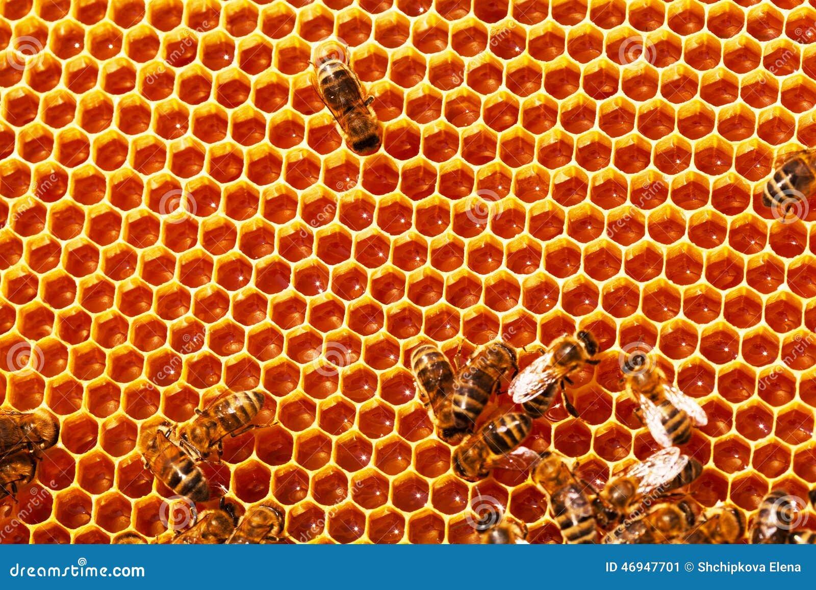 οι μέλισσες κλείνουν την κυψελωτή εικόνα επάνω εργαζόμενος