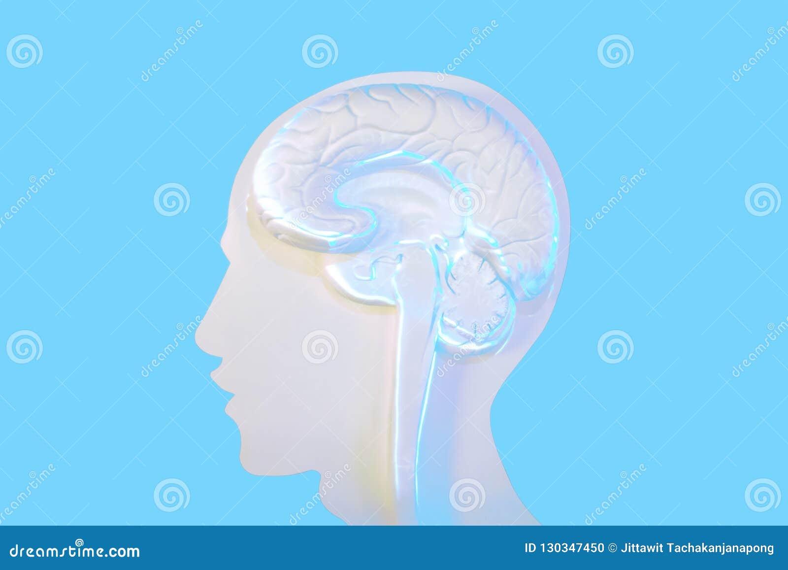 Οι μορφές και ο εγκέφαλος προσώπου είναι τα κύρια συστατικά της εργασίας