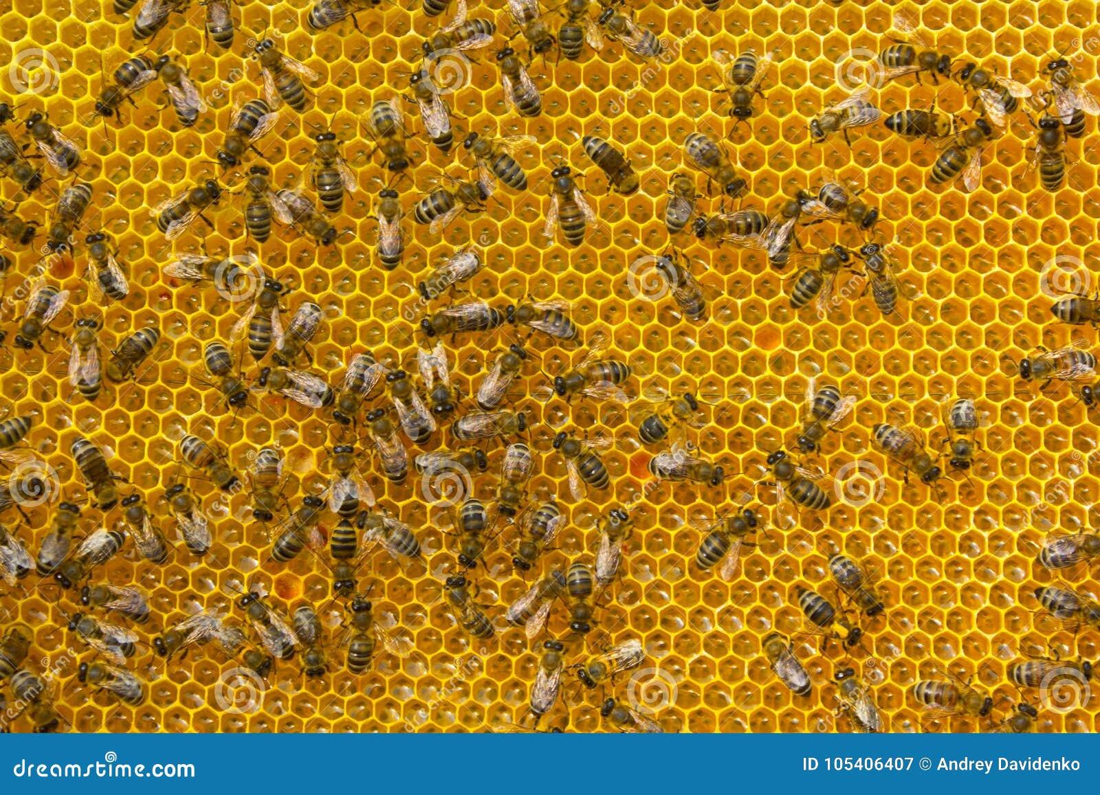 Download Οι νέες μέλισσες μετατρέπουν το νέκταρ στο μέλι Στοκ Εικόνα - εικόνα από τρόφιμα, χτένα: 105406407