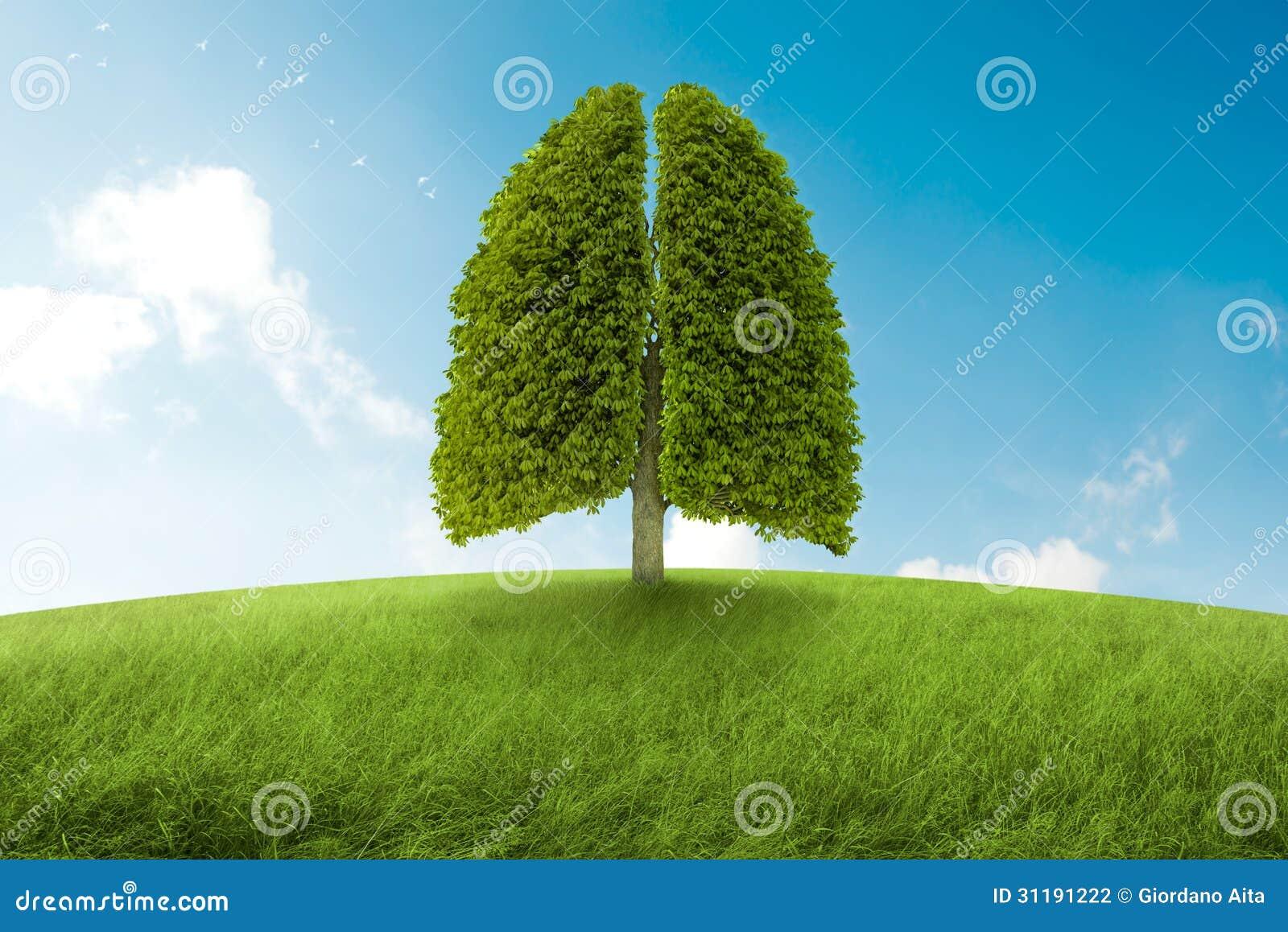 Οι πνεύμονες της γης απεικόνιση αποθεμάτων. εικονογραφία από έννοια ... d5b73b13bfe