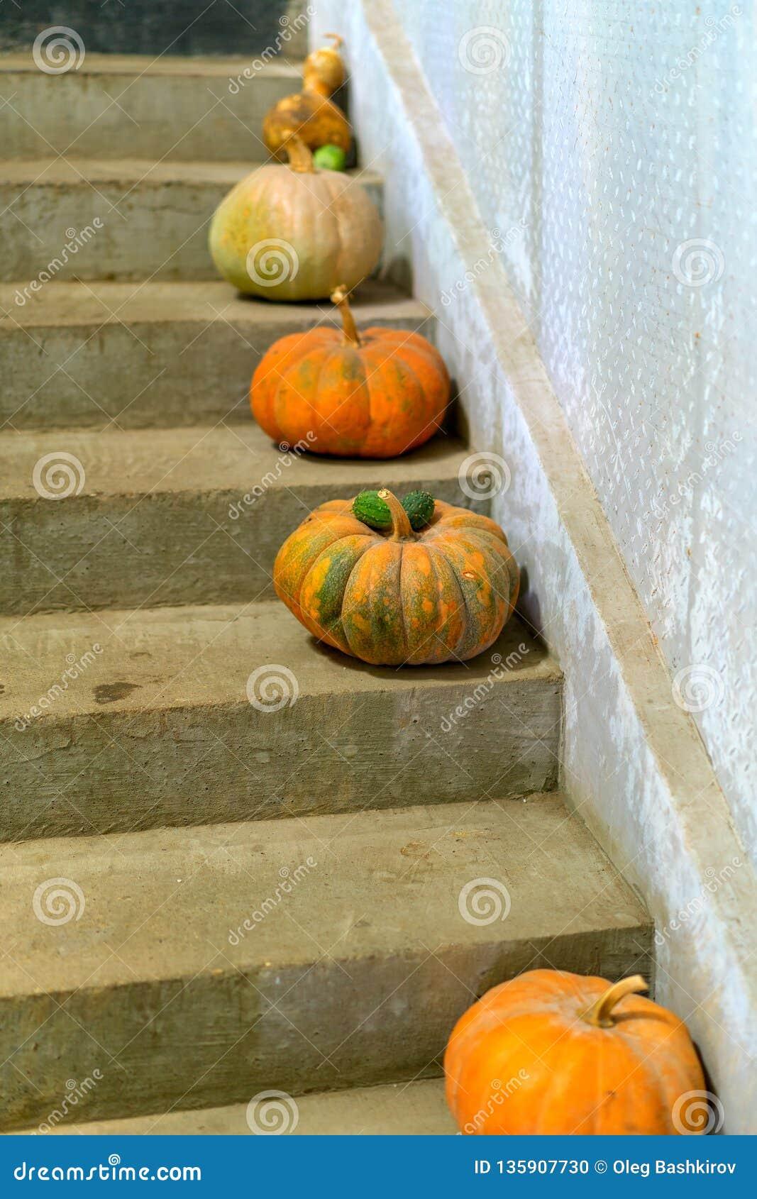 Οι πολύχρωμες κολοκύθες είναι στα σκαλοπάτια πετρών στη αγροικία