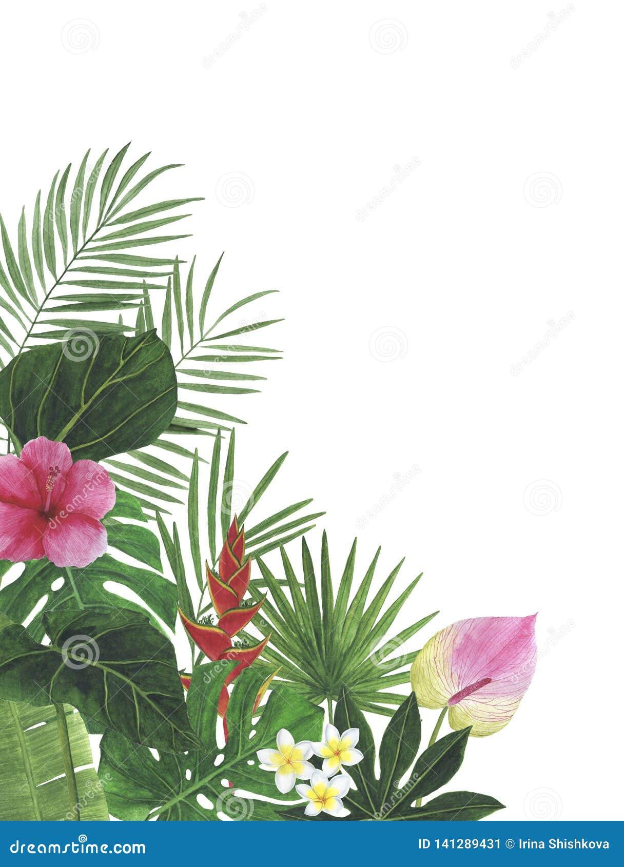 Οι τροπικοί κύκλοι ανθίζουν hibiscus τη βοτανική διακόσμηση σχεδίου πρόσκλησης καρτών διακοσμήσεων διακοσμήσεων απεικονίσεων Wate