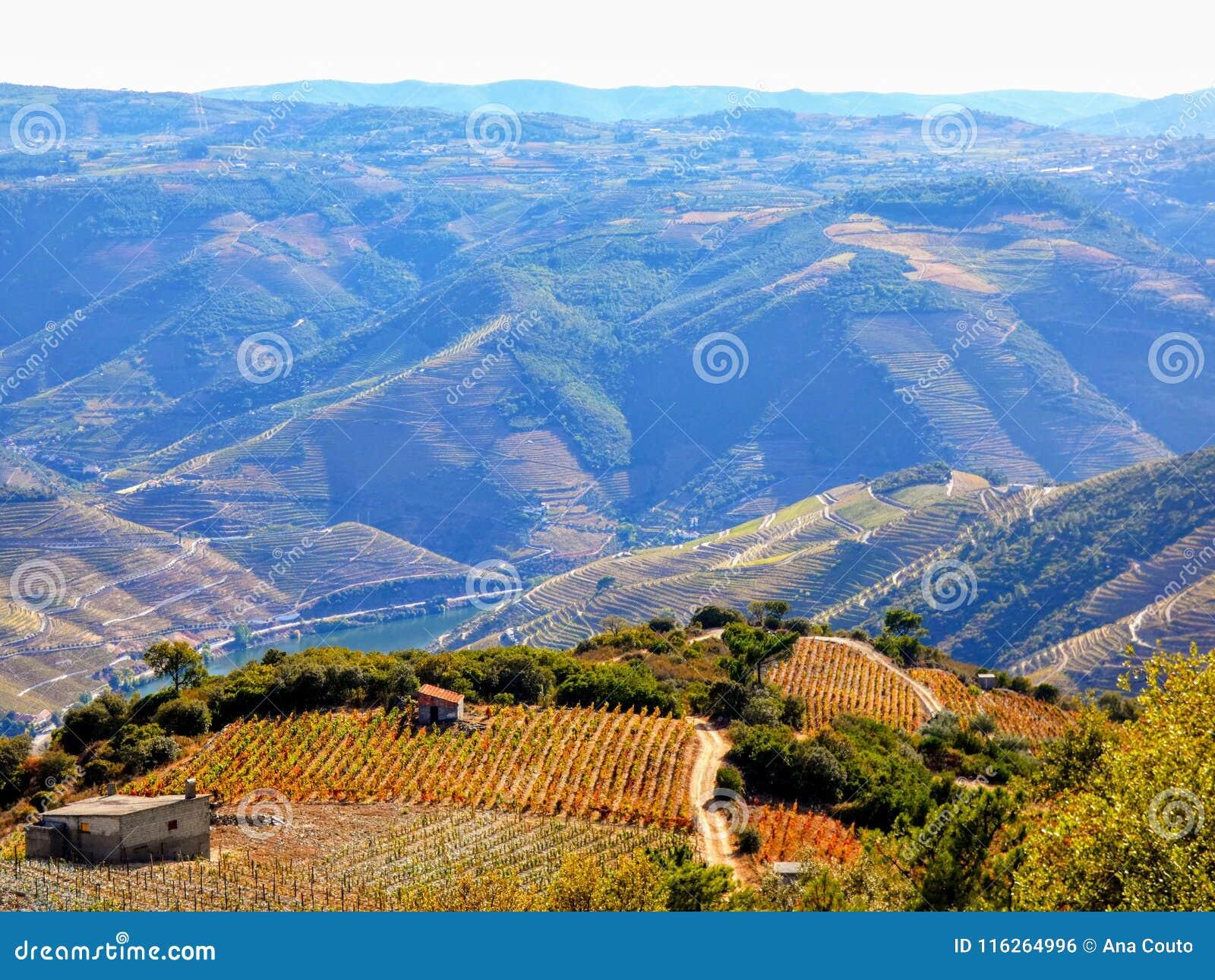 Οι Terraced αμπελώνες διαμορφώνουν τις βουνοπλαγιές της κοιλάδας ποταμών της Πορτογαλίας ` s Douro