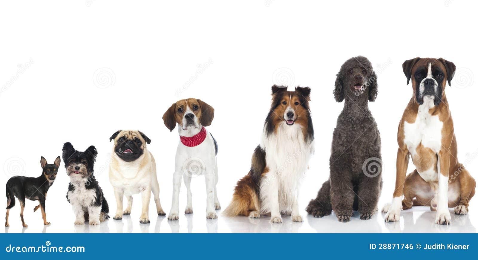 Ομάδα σκυλιών