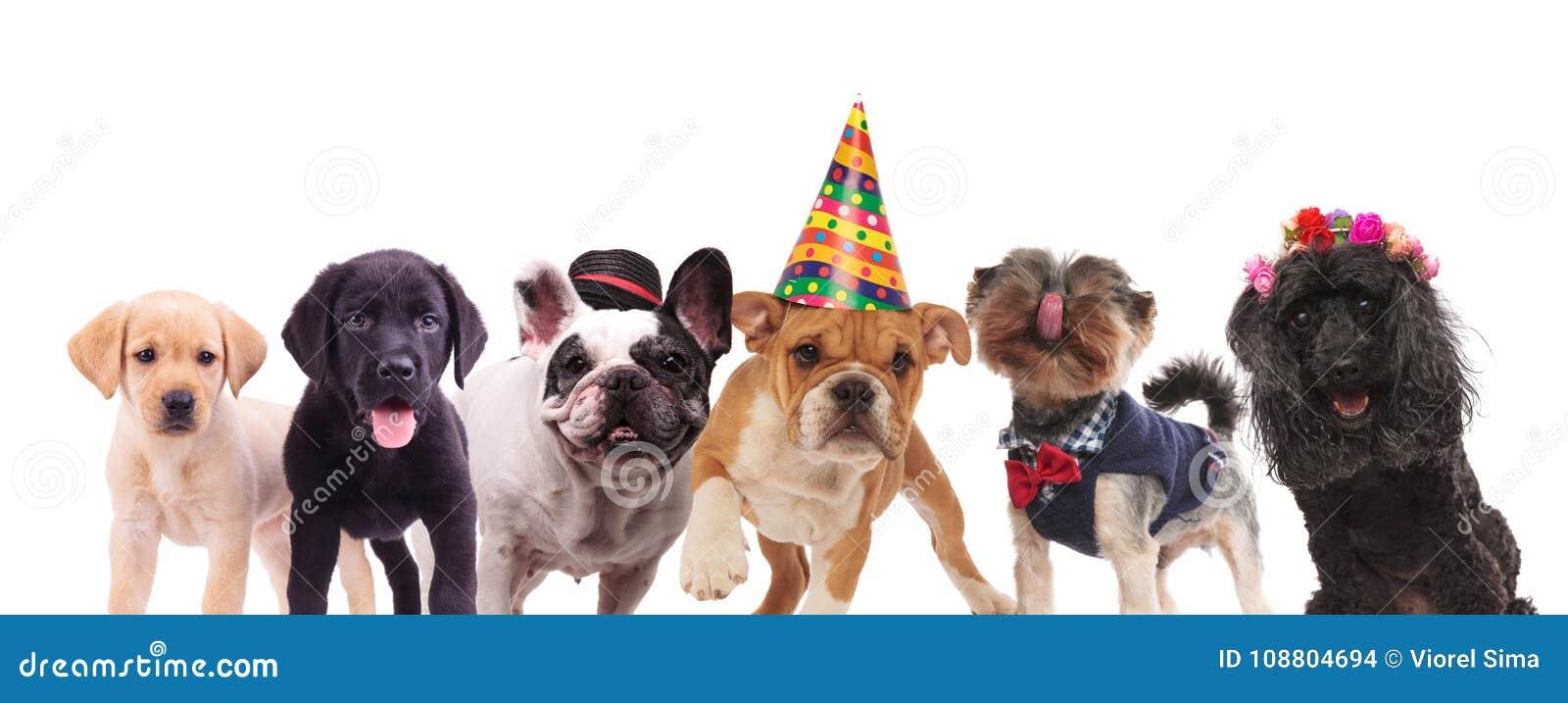 Ομάδα χαριτωμένων σκυλιών που στέκονται από κοινού