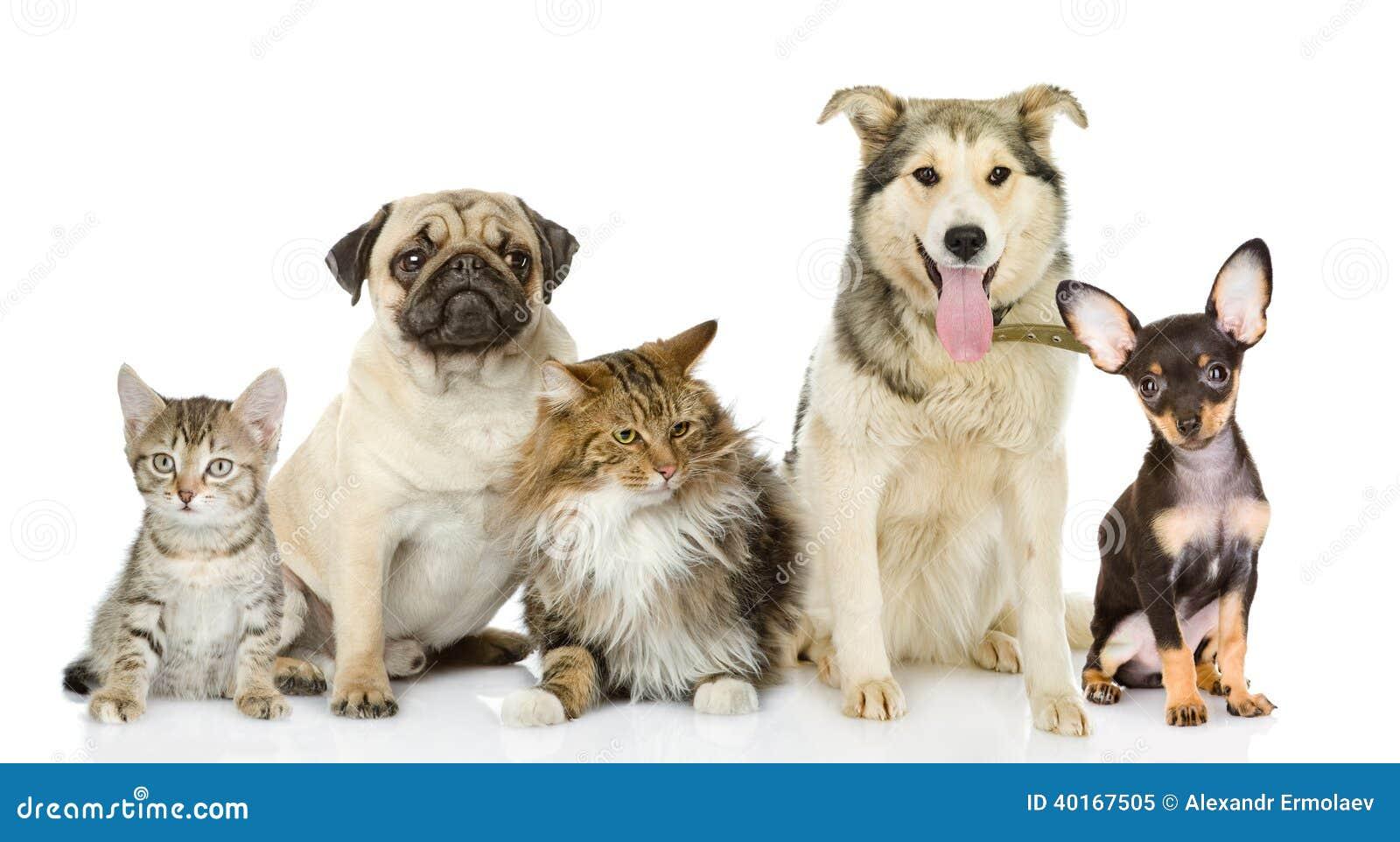 Ομάδα γατών και σκυλιών στο μέτωπο.