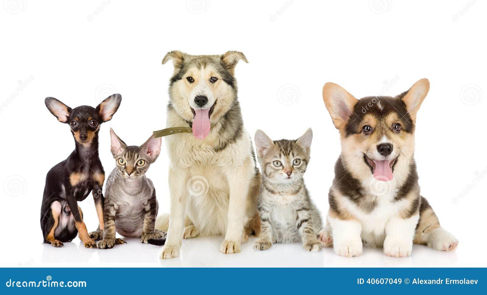 Ομάδα γατών και σκυλιών στο μέτωπο