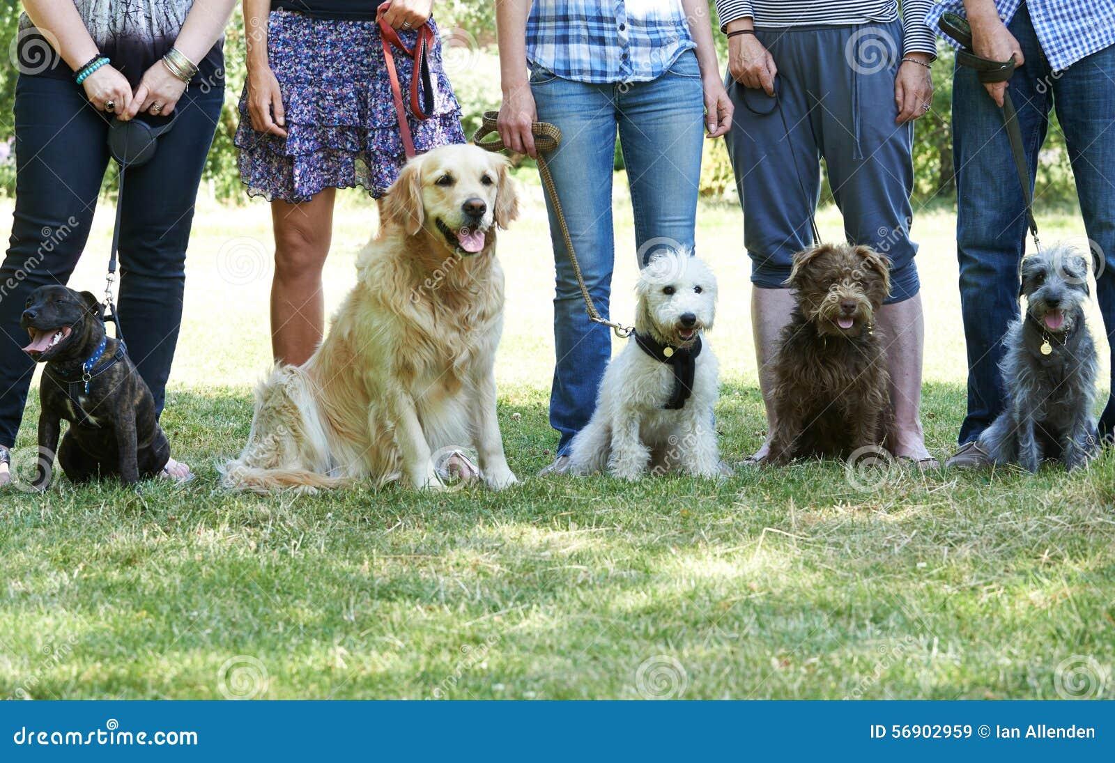 Ομάδα σκυλιών με τους ιδιοκτήτες στην κατηγορία υπακοής