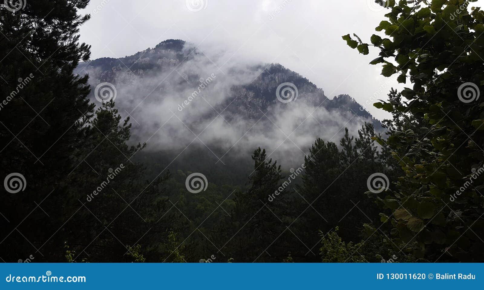 Ομίχλη στα δάση βουνών