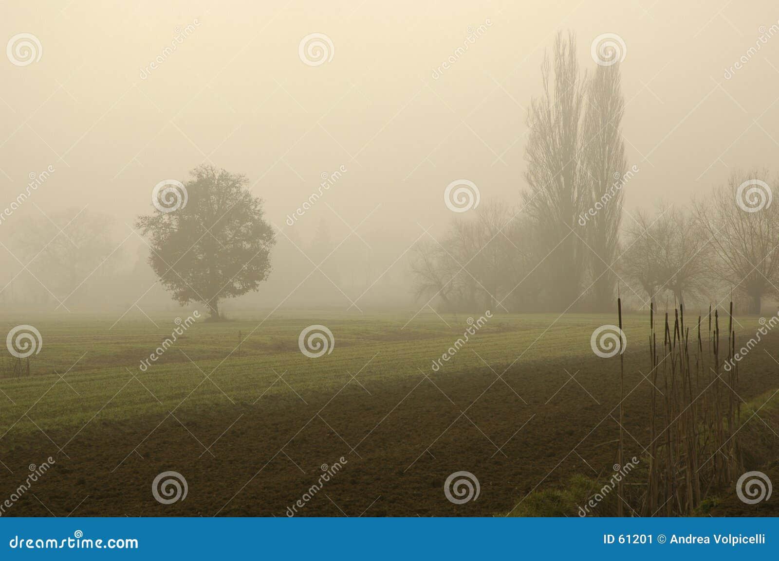 Download ομίχλη 01 στοκ εικόνα. εικόνα από ονειροπόλος, ήρεμος, ηρεμία - 61201