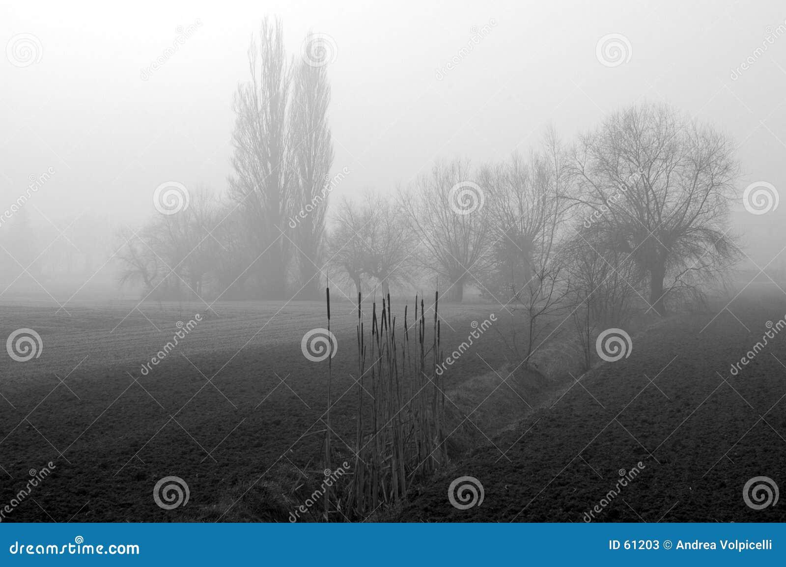 Download Ομίχλη 02 στοκ εικόνα. εικόνα από σκιαγραφία, κρύο, πτώση - 61203