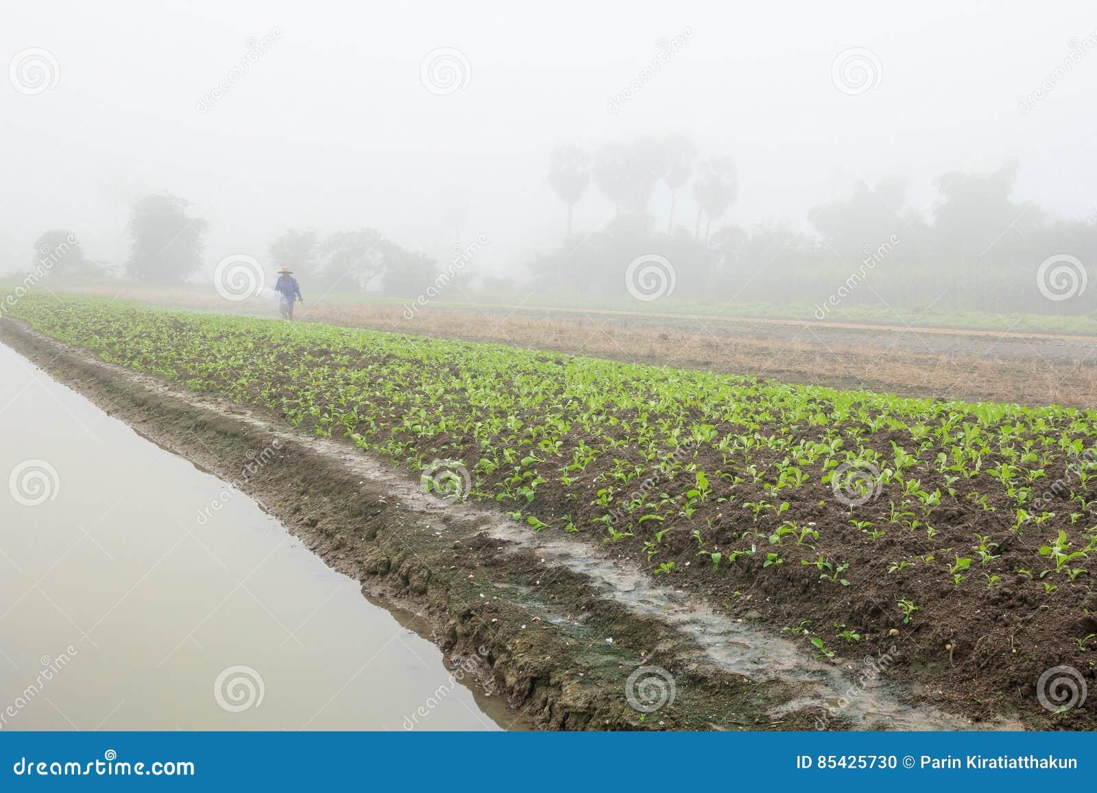 Ομίχλη πρωινού στους τομείς γεωργίας