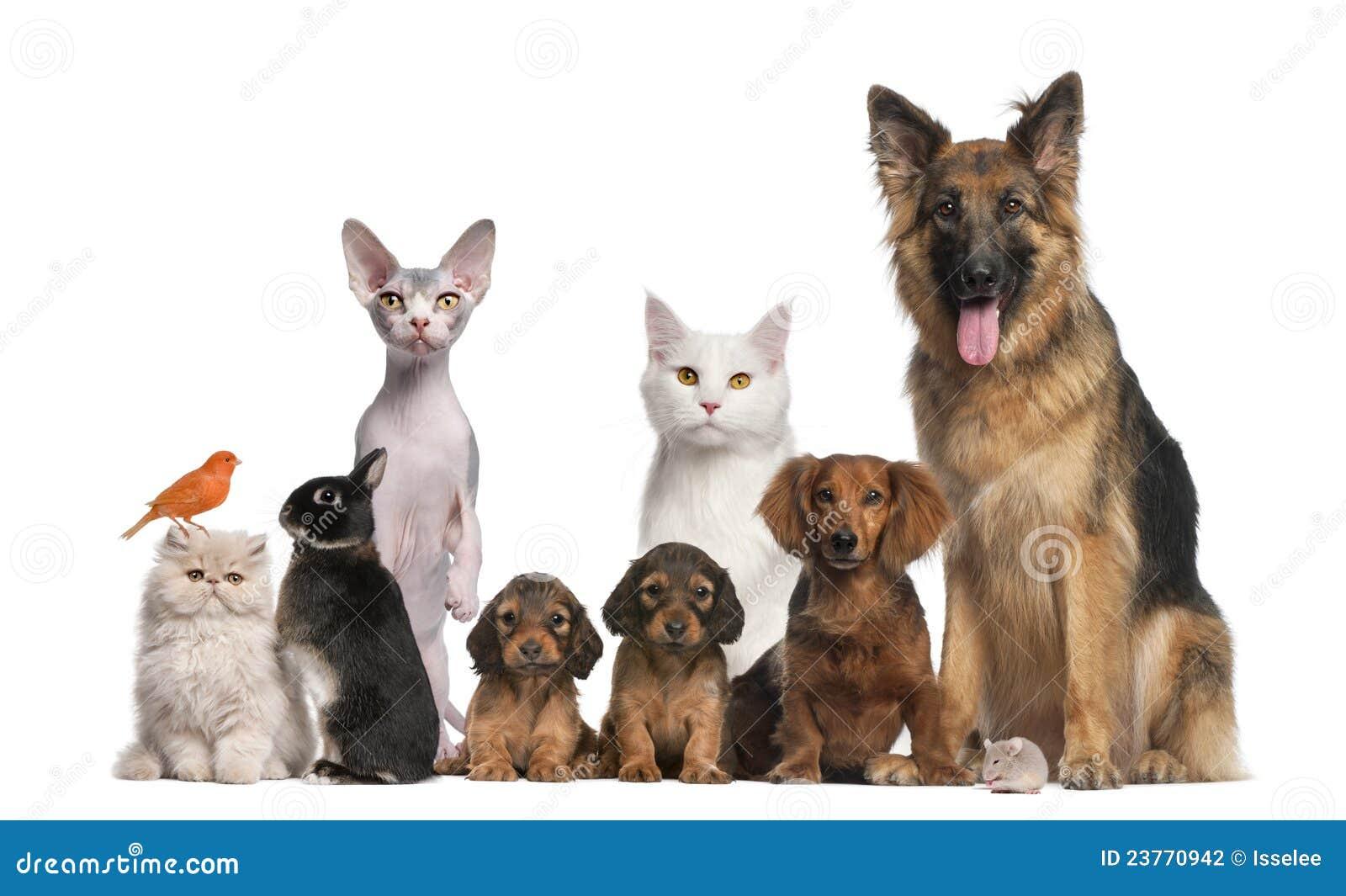 ομαδοποιήστε τα κατοικίδια ζώα