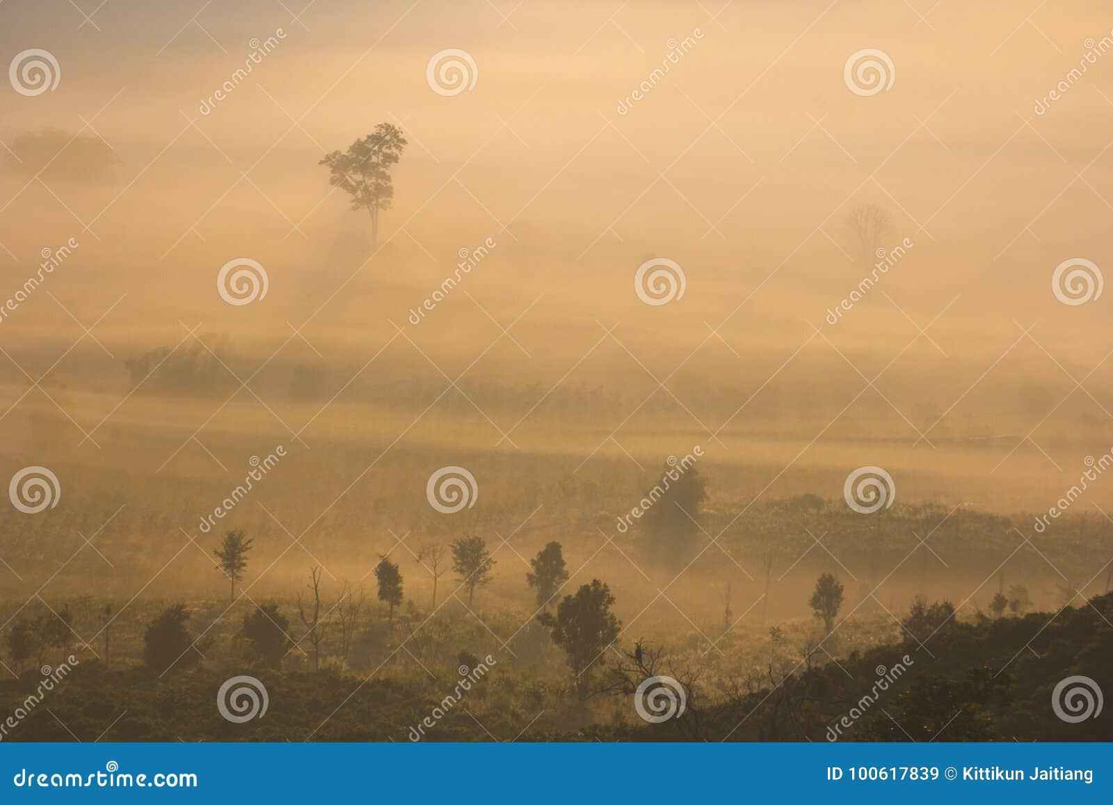 ομιχλώδες δάσος