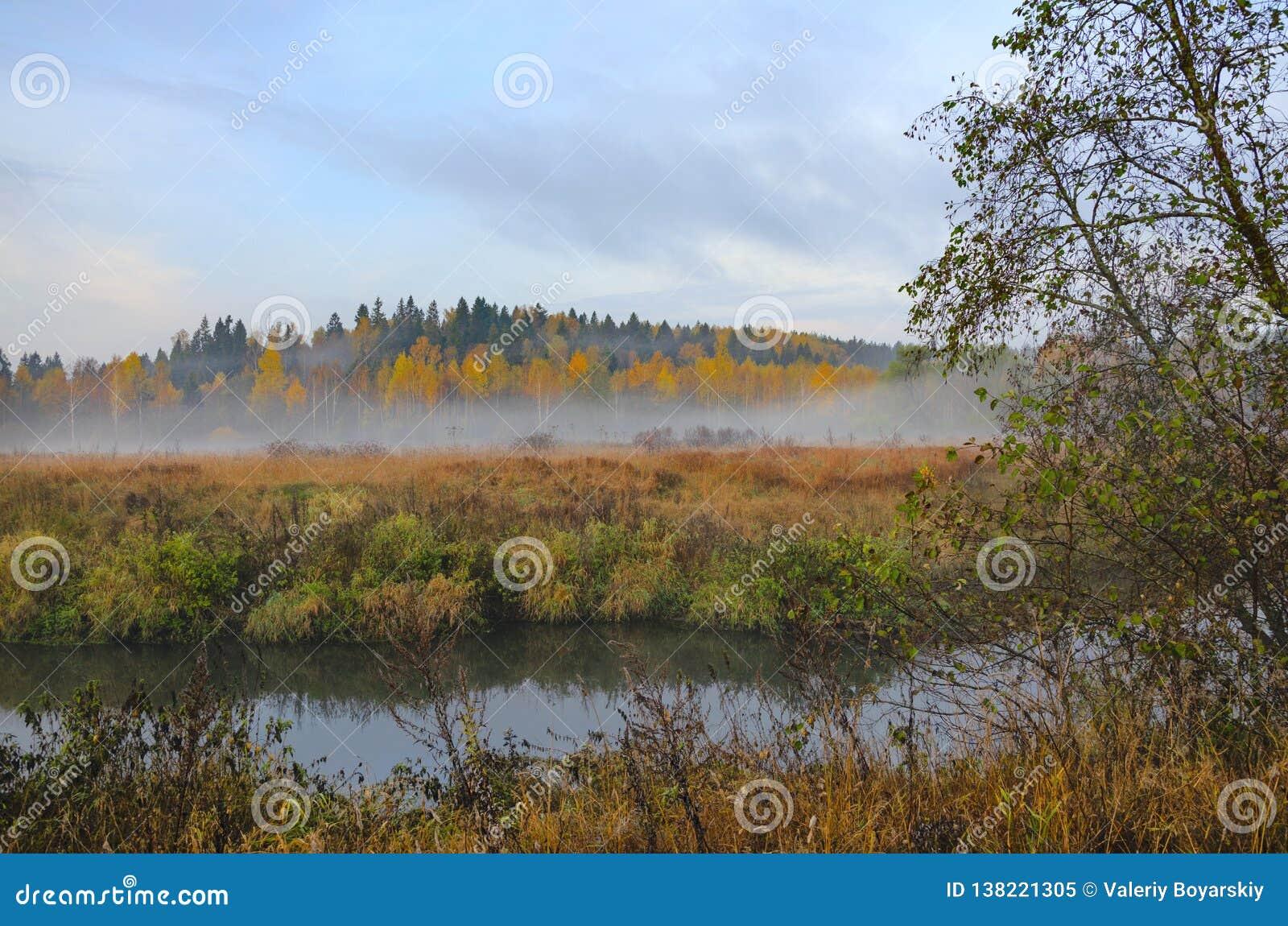 Ομιχλώδες τοπίο φθινοπώρου με το μικρό δασικό ποταμό