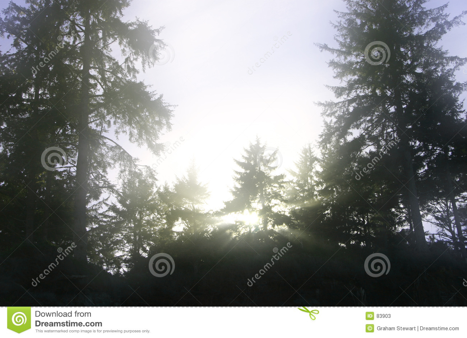 ονειροπόλα δέντρα