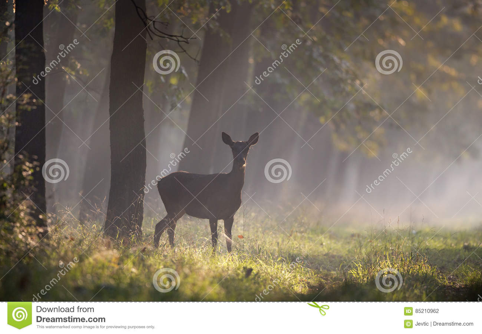 Οπίσθιος στο δάσος